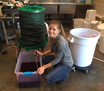 Food Science graduate student Meghan Ruppel sampling freshly pressed wine